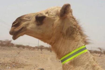 Photo of ماهي مرخيات القلايد