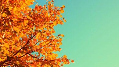 Photo of ما هو الاعتدال الخريفي , كيف يحدث الاعتدال الخريفي