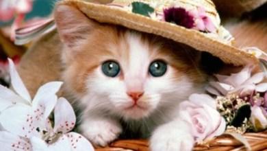 Photo of صور قطط حلوه , صور اجمل القطط الصغيرة في العالم , صورقطط شراز