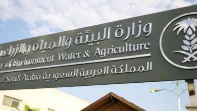 Photo of السماح للقطاع الخاص باستيراد الشعير العلفي لغرض التجارة