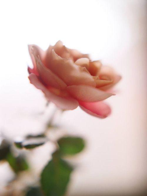 صور عن الورد روعة