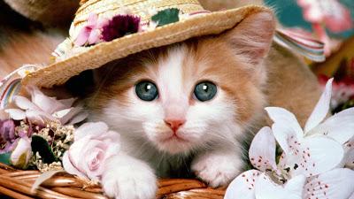 امراض التي قد تصيب القطط