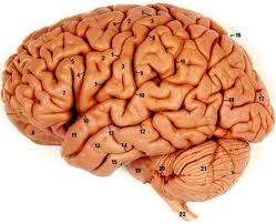 Photo of الدماغ والذاكرة والذكاء – تقوية الدماغ
