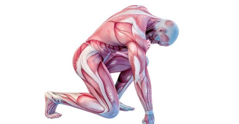 Photo of صف كيف ترتبط العضلات مع العظام