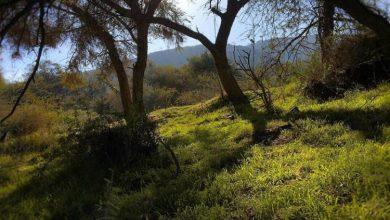 Photo of مشاهد خلابة من غابة ماطوه الواقعة جنوب المملكة
