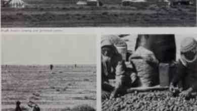 Photo of شاهد… التابلاين تنشر تقريراً عن موسم الفقع في حفر الباطن قبل 48 عاماً