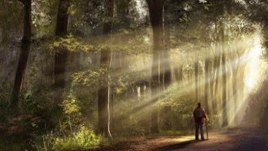 Photo of قصة رائعة : العبقري الذي تاه في الغابة !