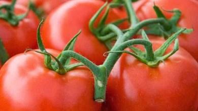 Photo of ملف كامل عن فوائد الطماطم الكثيرة للصحة والجمال والوقاية من الأمراض
