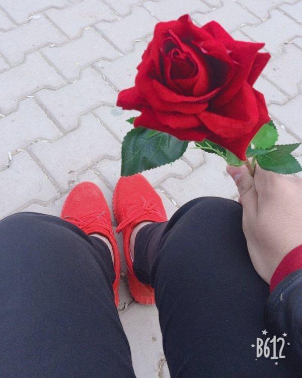 صورة وردة حمراء هدية
