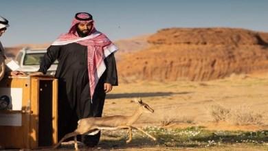 Photo of ولي العهد يطلق محمية شرعان الطبيعية