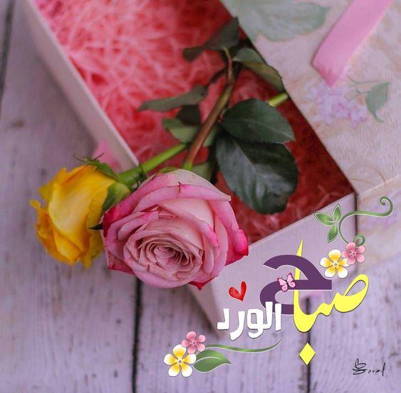 كلمات عن الورد الاصفر تويتر Aiqtabas Blog