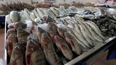 Photo of الإمارات تطلق أول خطة وطنية لإعادة بناء المخزون السمكي