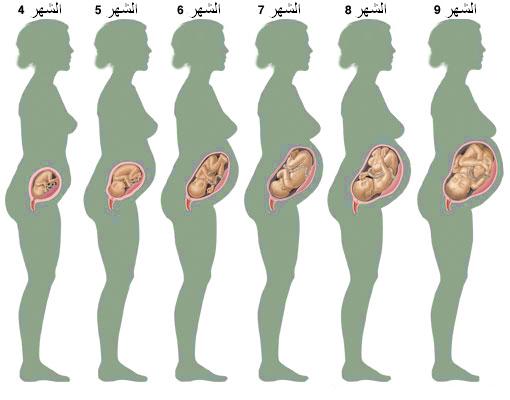 Photo of مراحل نمو الطفل في رحم الأم