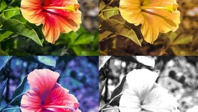 Photo of أنواع وعلاج عمى الألوان