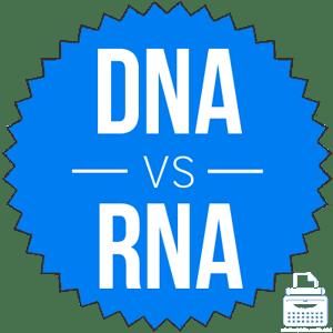 Photo of الفرق بين DNA و RNA