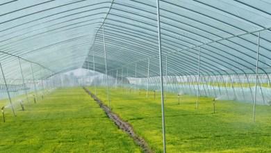 Photo of أهمية الزراعة داخل البيوت البلاستيكي