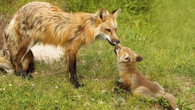 Photo of التوالد عند الحيوانات