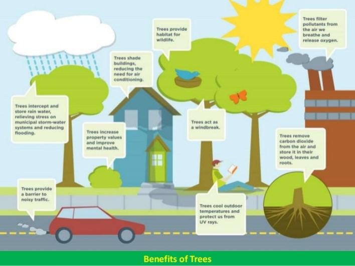 ما هي فوائد الأشجار