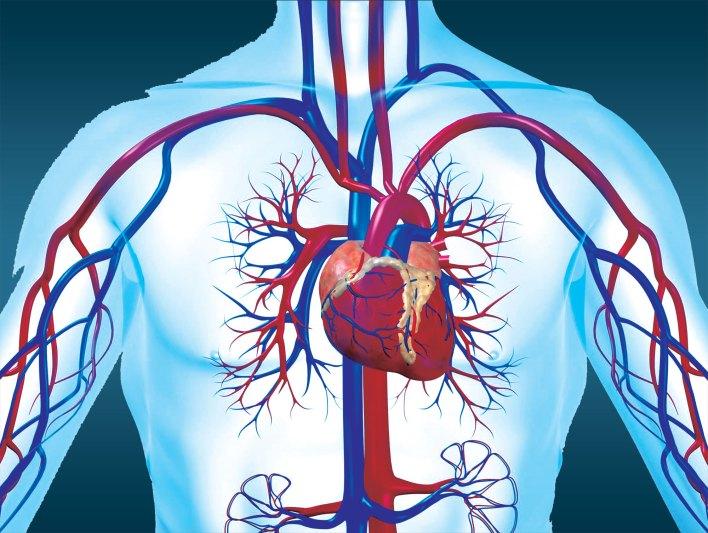 اهم اعراض مرض القلب