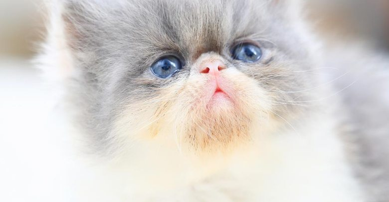 Photo of معلومات مفصلة عن عالم القطط الجميل