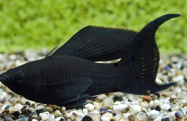 تعرف على اشهر انواع سمك الزينة .