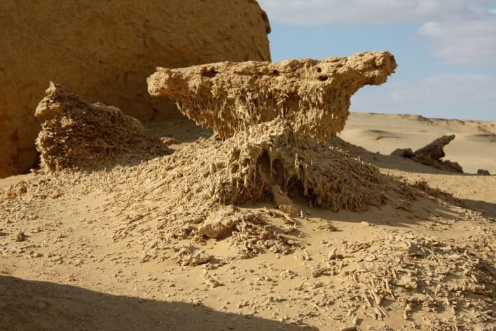 حفريات وادي الحيتان