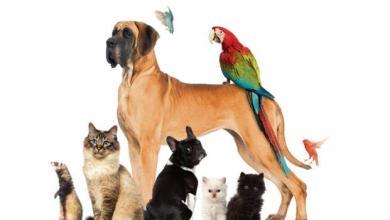 Photo of أهمية تربية الحيوانات الأليفة
