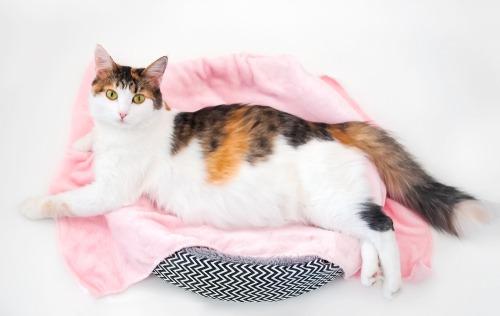 Photo of رعاية القطط والعناية بها في فترة الحمل