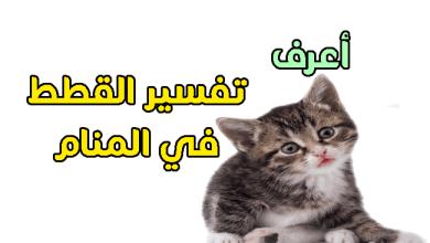 Photo of تفسير حلم القطه في المنام