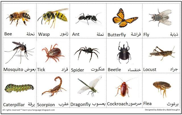 صورة أسماء الحشرات بالانجليزي Insect names in English