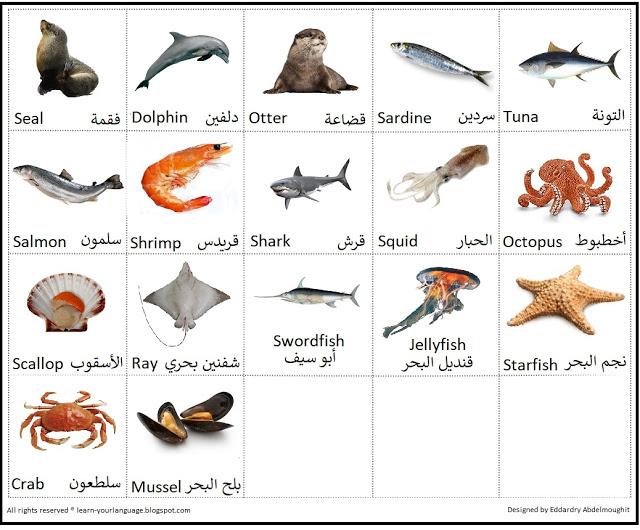 صورة حيوانات وأسماء أسماك البحر