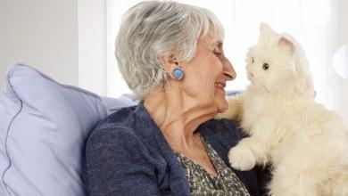 Photo of فوائد الحيوانات الأليفة في المنزل لكبار السن