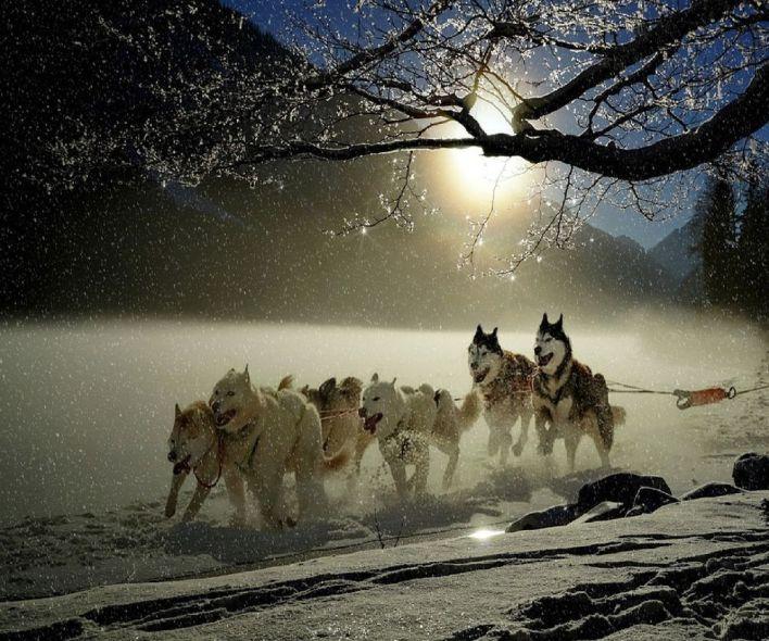 حلم الكلاب في المنام