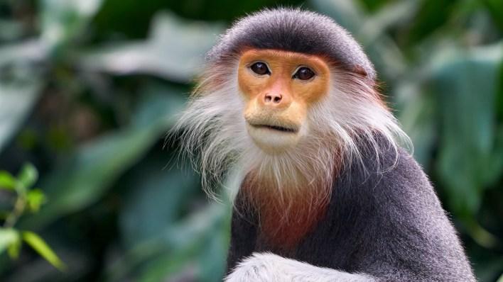 تفسير حلم القرد للمتزوجة