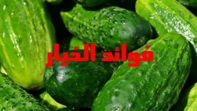Photo of فوائد الخيار