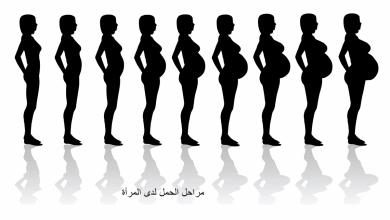 Photo of مراحل الحمل
