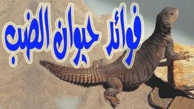Photo of فوائد الضب