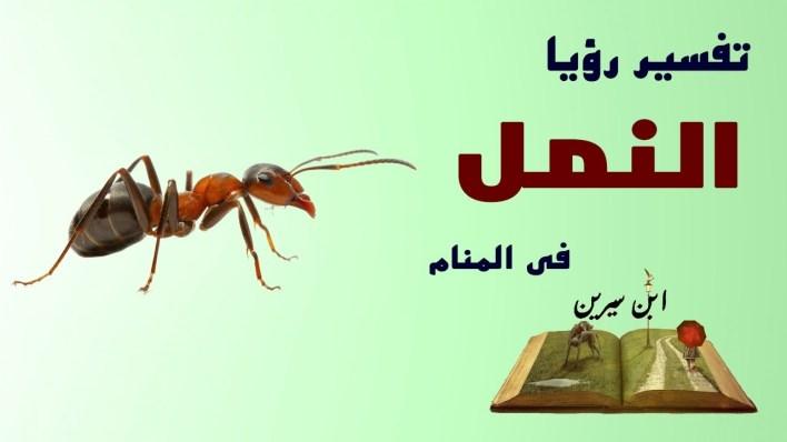 تفسير حلم النمل .