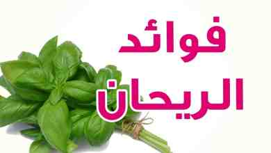 Photo of فوائد الريحان للبشرة