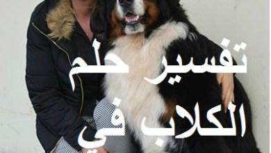 Photo of تفسير حلم الكلاب في المنام