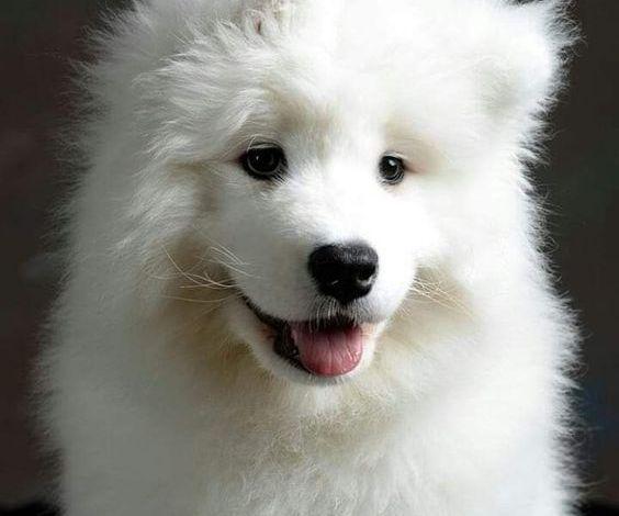 Photo of تفسير حلم الكلاب البيضاء في المنام