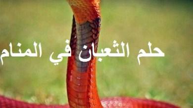 Photo of تفسير حلم الثعبان في المنام