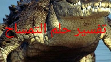 Photo of تفسير حلم التمساح