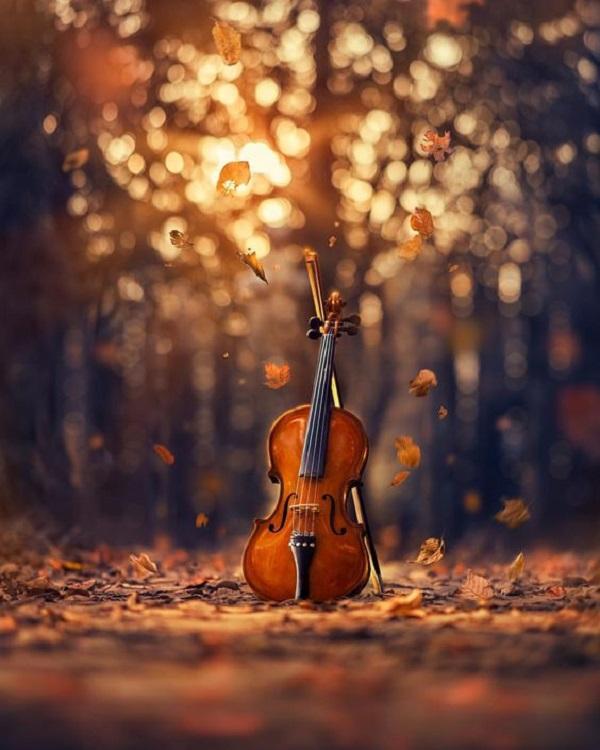 حلم الة الكمان