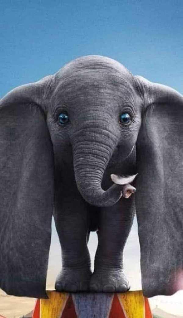 تفسير حلم الفيل للمتزوجة