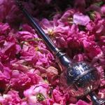 فوائد الورد المحمدي