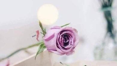 Photo of صور عبارات مساء الخير , صور مساء الخير
