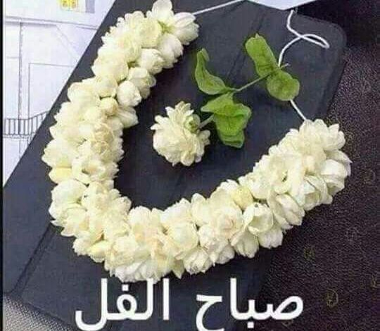 Photo of صباح الفل , صور مميزة للصباح