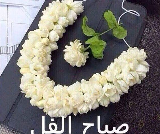 Photo of صباح الفل , اروع صباح للاحباب صباح الفل