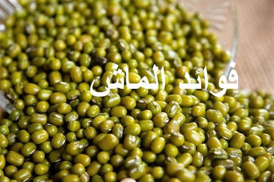 Photo of فوائد الماش